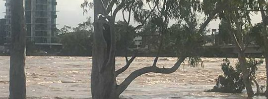 Rockhampton Flood Emergency